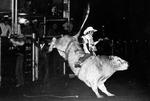 Bull Riding-2  1970s