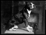 Duke:  SWOSU's First Mascot